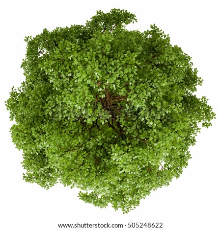 Single tree isolated on white background. 3D illustration. High quality