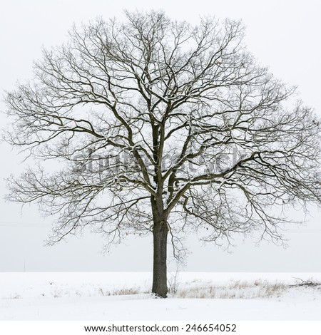 Single tree on a snow covered field - stock photo
