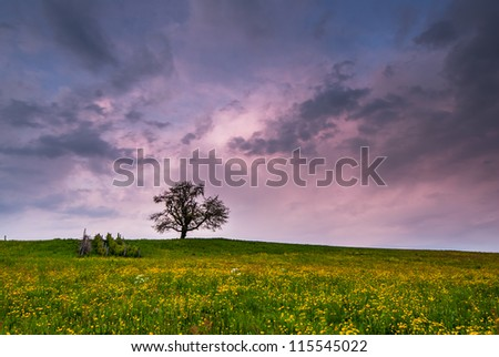 single tree on blossoming meadow at sunset with dark clouds - stock photo