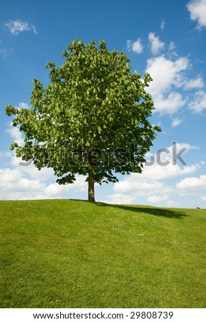 Single tree on grass against blue sky with clouds - stock photo