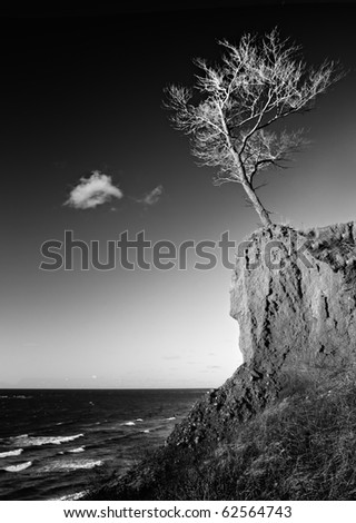 single tree on the beach - stock photo