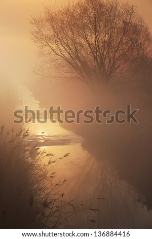 Single tree on the river in the mist at sunrise - stock photo