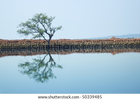 Single tree reflected in the water. Horizontal photo with natural colors - stock photo