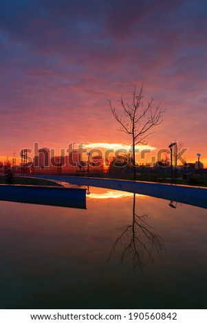 Single tree reflected in the water. Vertical photo with natural colors - stock photo