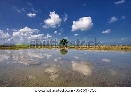 Single tree reflections with nice blue sky and clouds. Nature composition. - stock photo