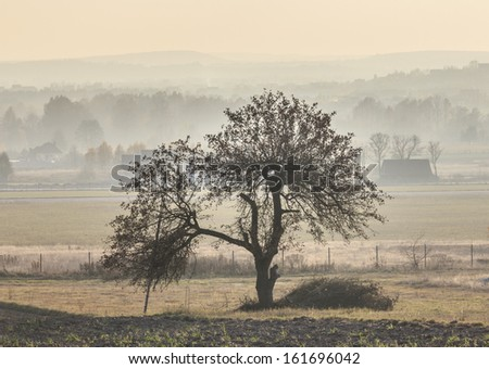 Single tree standing lonely in the middle of a field in misty autumn landscape