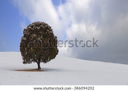 Single tree,Tree and field is covered by snow in winter.Olympic park in korea. - stock photo