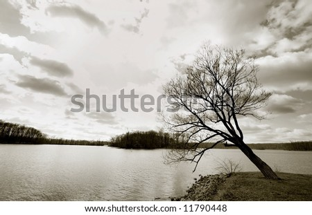 Single tree with cloudy sky background insepia color tone