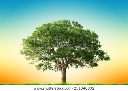 Single tree with green grass over sky background - stock photo