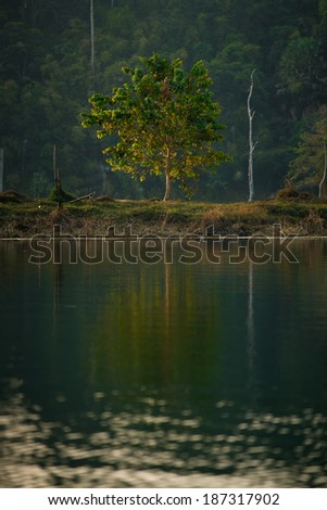 Single tree with sunrise at Rachapapha dam. Khao Sok National Park. Thailand. - stock photo