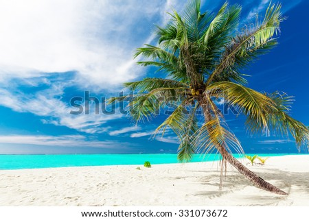 Single vibrant coconut palm tree on a white tropical beach of Maldives - stock photo