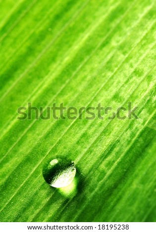 single water-drop on green plant - stock photo