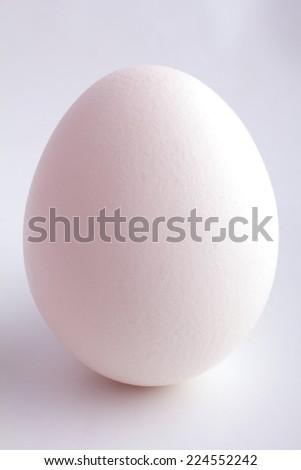 Single white chicken egg - stock photo