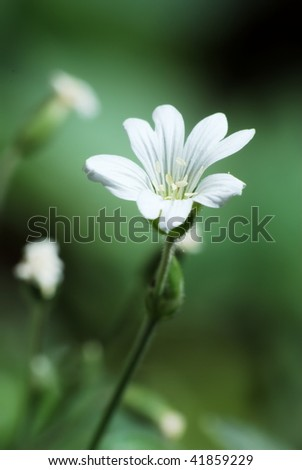Single white flower on green background - stock photo