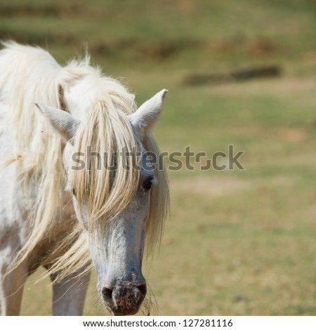 Single white horse in field. - stock photo