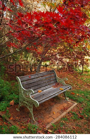 Single wooden bench in an autumn park with colored trees everywhere