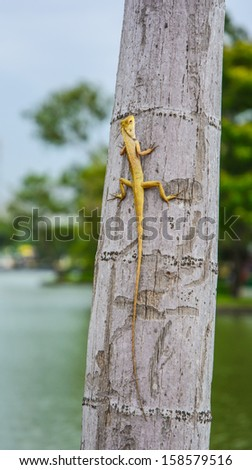 single yellow baby dragon animal at high tree on natural view