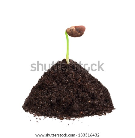 Single young green plant with seed in a mound of ground. Isolated on white background. Close-up. Studio photography. - stock photo
