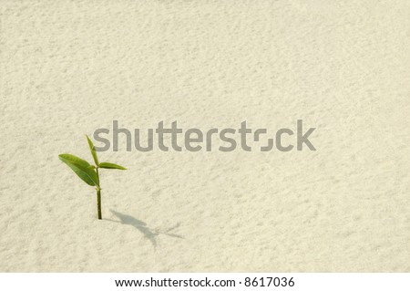 Single Young Plant Sprouting from a Sea of Sand - stock photo