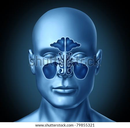 Sinus cavity on a human head representing a medical symbol of nasal anatomy. - stock photo