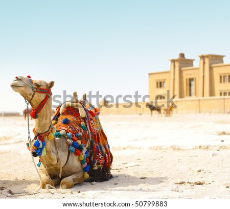 Sitting camel on sand with blue sky - stock photo