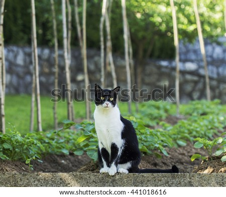 Sitting cat and looking around the garden. - stock photo