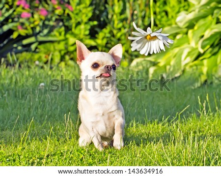 sitting dog on the lawn and looking on the flower