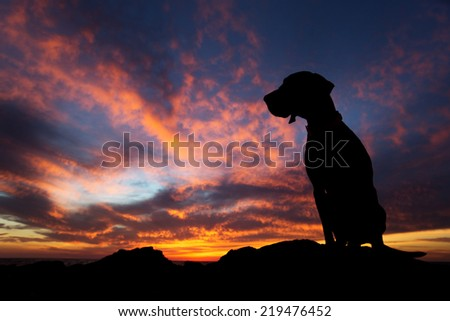 sitting dog silhouette in the sunset reflecting into the clouds  - stock photo