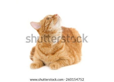 Sitting ginger cat looking up. Isolated on white - stock photo