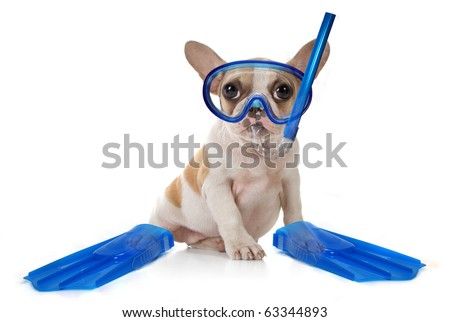 Sitting Puppy Dog With Snorkeling Gear of a Mask With Fins. Studio Shot - stock photo