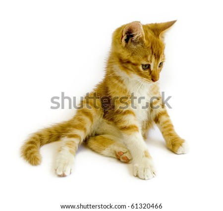 sitting red cat isolated on white background - stock photo