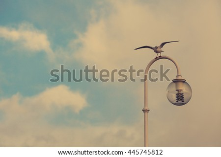 Sitting seagull on lantern over blue sky with clouds background. Copy-space. Outdoor shot