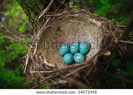 Six eggs in a nest of a song thrush. Colour of eggs as for Easter - stock photo