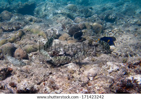 Six Siganidae and Yellowtail tang are on the seabed - stock photo