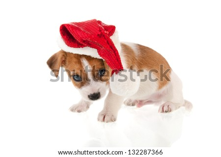 Six weeks old Jack Russel puppy dog as Christmas Santa Claus isolated over white background - stock photo