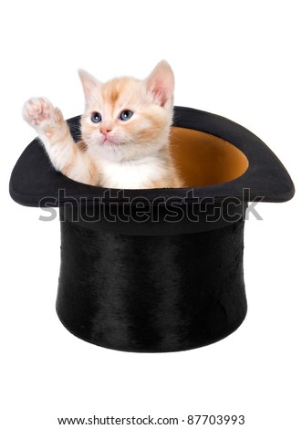 Six weeks old kitten in a top hat, waiving with his paw - stock photo