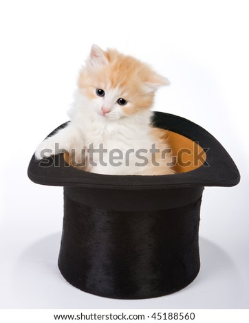 Six weeks old red kitten in a magician's hat