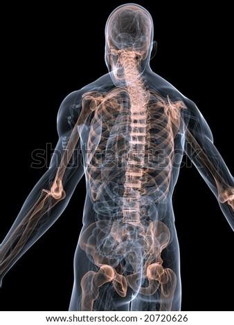 skeletal back - stock photo