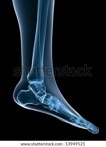 skeletal foot - stock photo