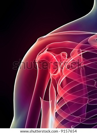 skeletal shoulder - stock photo