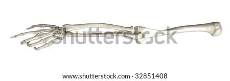 skeleton arm pointing on white background - stock photo