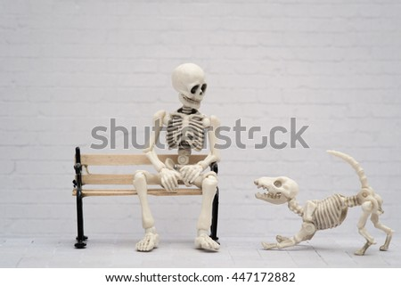 skeleton dog want to play
