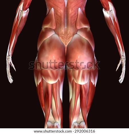 skeleton hibs - stock photo