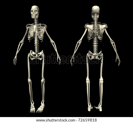 skeleton stock illustration 270540713 - shutterstock, Skeleton