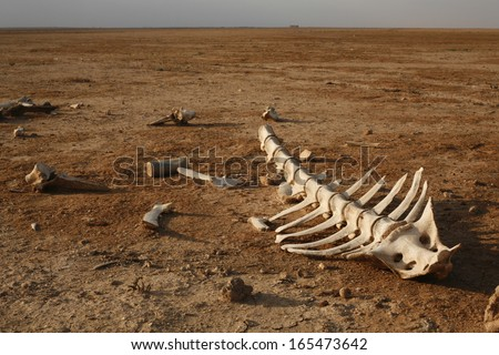 skeleton in desert with single bones around - stock photo