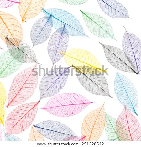 Skeleton leaf abstract background. Decorative ornament of colored leaves pattern. Template for design fabric, backgrounds, wrapping paper, package, covers - stock photo
