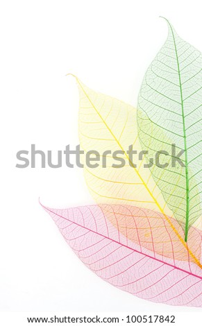 Skeleton leaf background
