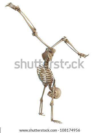 skeleton pirouette - stock photo