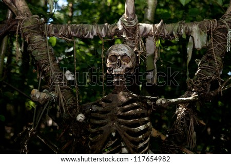 skeleton skull on stake, human sacrifice in jungle. creepy dead person - stock photo
