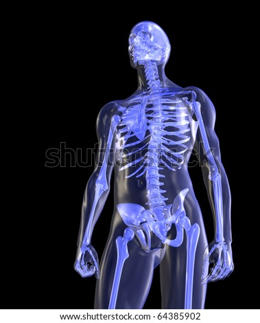 Skeleton, Transparent, Standing Tall